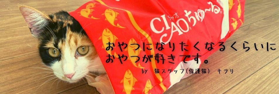 沖縄の保護猫とつながる『カフェ&ショップNouvelle Vague/ヌーベルバーグ』